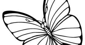 disegno farfalle colorare sei