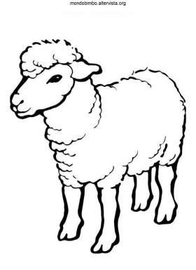 disegno pecore colorare pecora piccolo